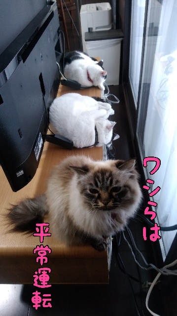 f:id:yasu-hito-i0863:20200215184909j:plain