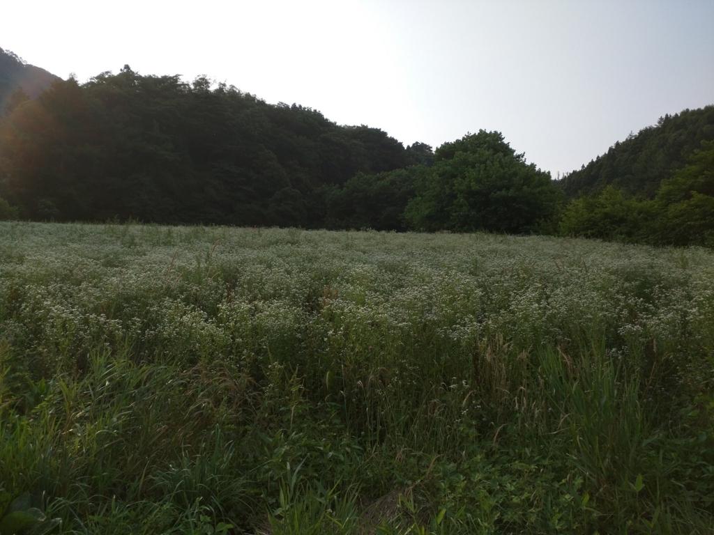 f:id:yasuaki-sakai:20170719072218j:plain