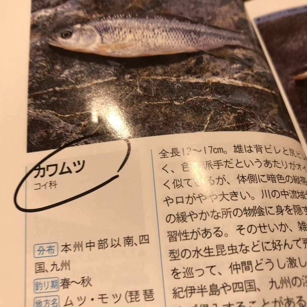 f:id:yasuda09020:20181003202117j:plain