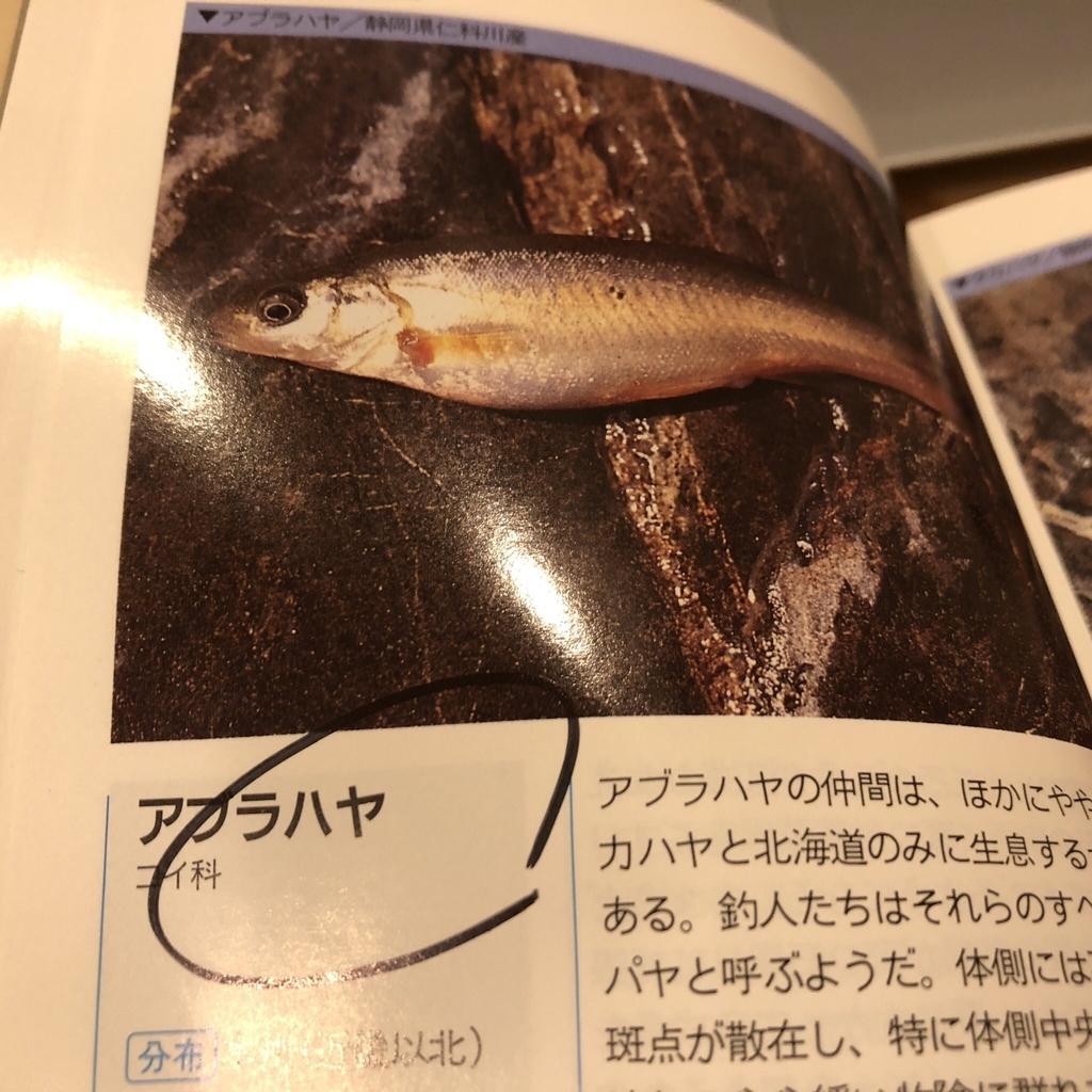 f:id:yasuda09020:20181003202124j:plain