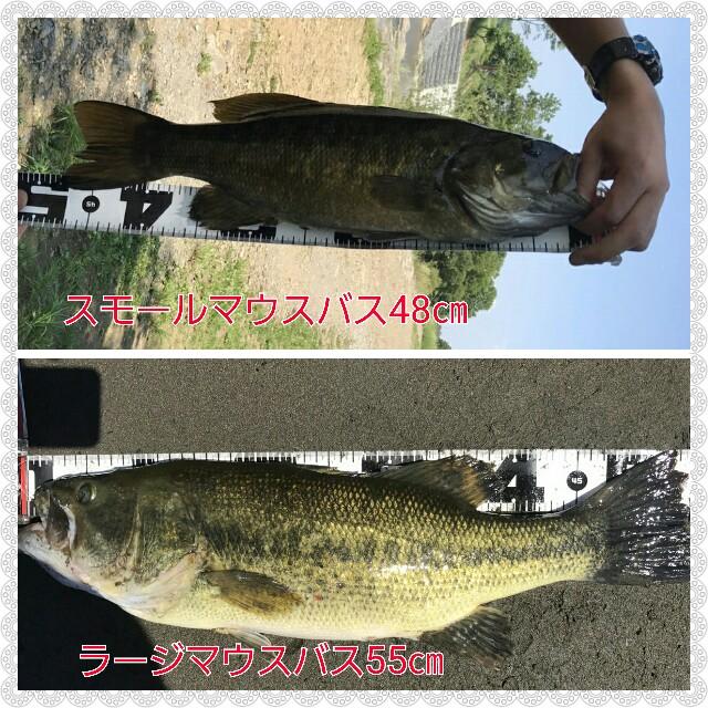 f:id:yasufumi617:20170529184014j:plain