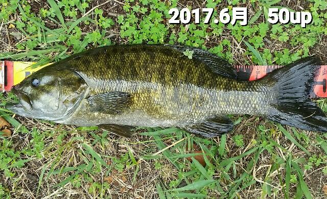 f:id:yasufumi617:20170701093547j:plain