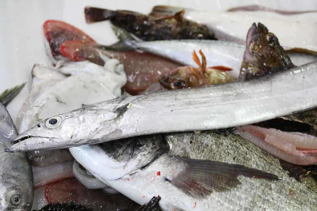 見たことがない瀬戸内海の魚がいっぱい