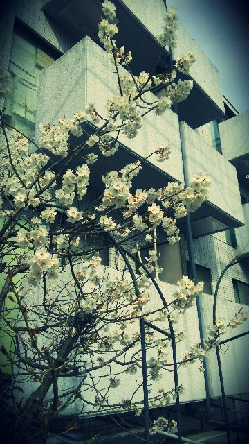 f:id:yasuka9981:20170331180011j:image