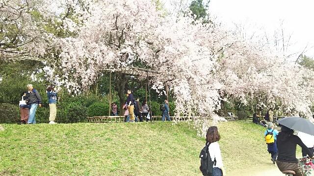 f:id:yasuka9981:20170419112717j:image