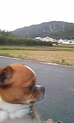 f:id:yasukazu01:20091115164330j:image