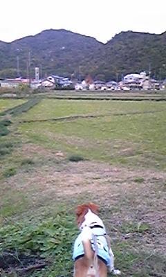 f:id:yasukazu01:20091115164640j:image