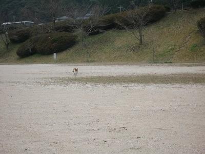 f:id:yasukazu01:20091213203954j:image