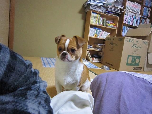 f:id:yasukazu01:20100320220934j:image