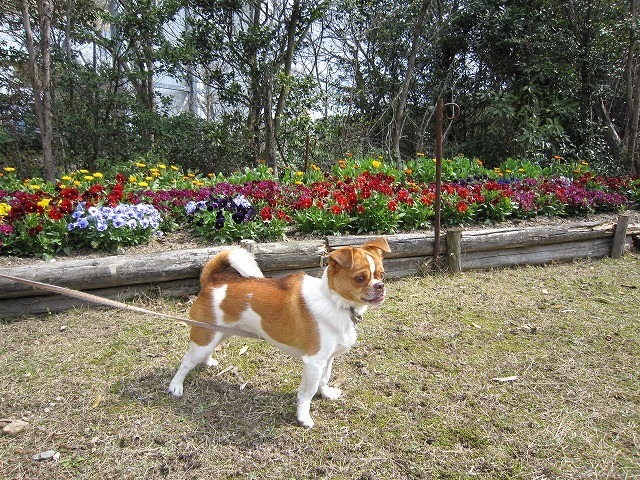 f:id:yasukazu01:20100329224727j:image