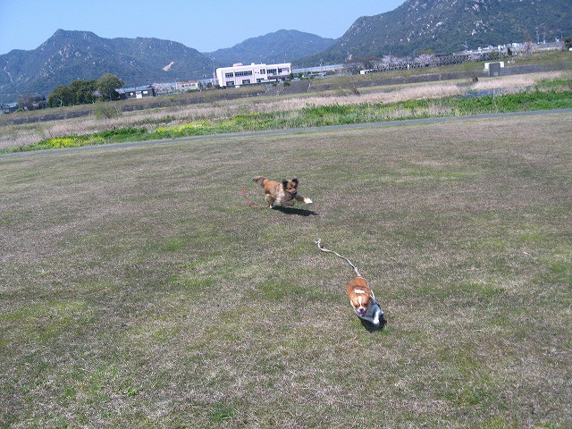 f:id:yasukazu01:20100405221725j:image