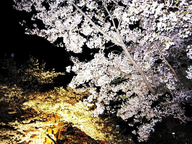f:id:yasukazu01:20100406223012j:image