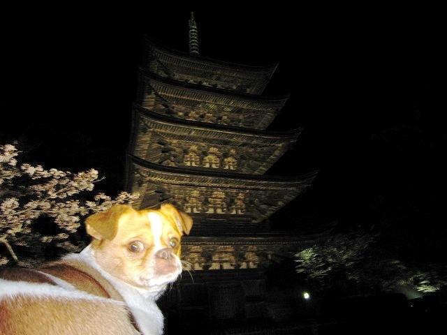 f:id:yasukazu01:20100406223015j:image