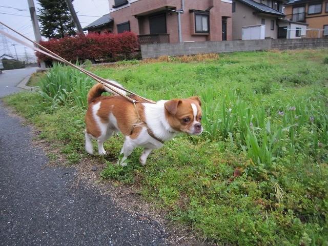 f:id:yasukazu01:20100412214147j:image