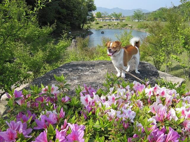 f:id:yasukazu01:20100503210540j:image