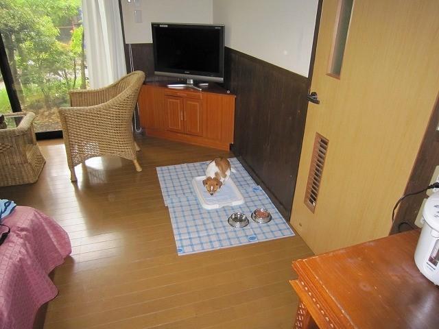 f:id:yasukazu01:20100510211129j:image