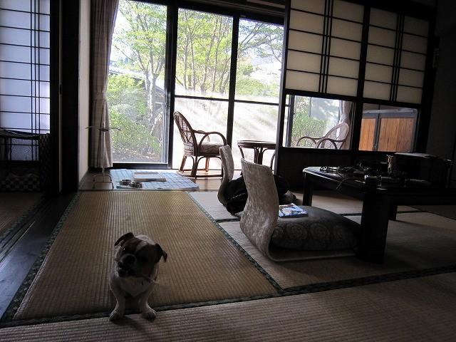 f:id:yasukazu01:20100517222254j:image