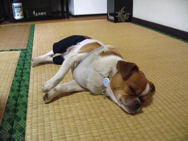 f:id:yasukazu01:20100519203154j:image