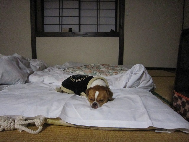 f:id:yasukazu01:20100519204144j:image
