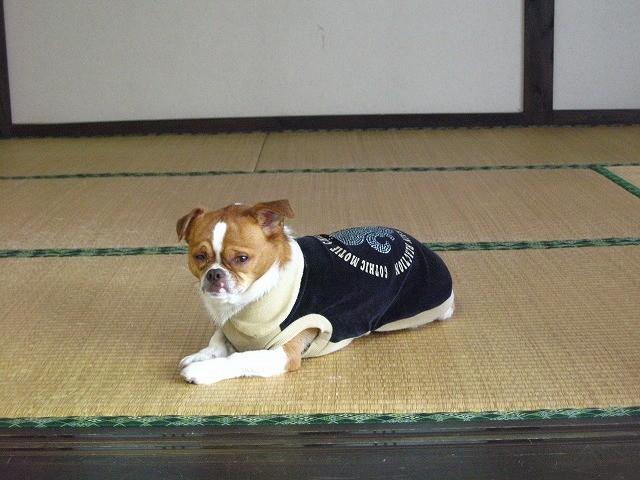 f:id:yasukazu01:20100520200707j:image