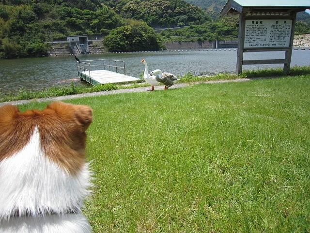 f:id:yasukazu01:20100526233529j:image