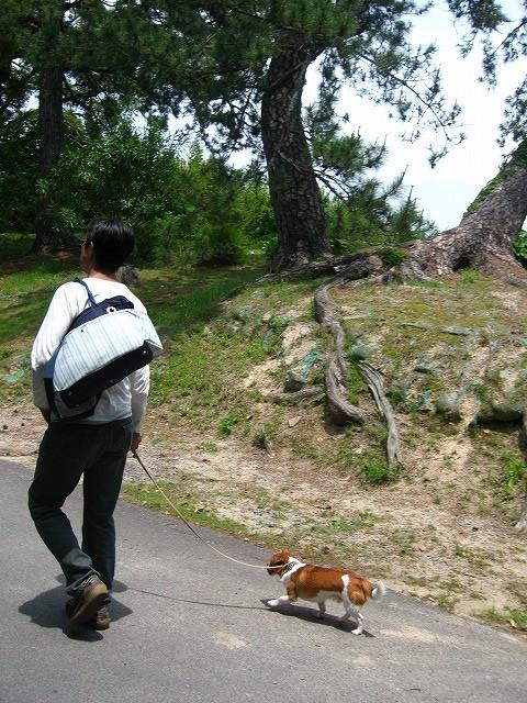 f:id:yasukazu01:20100601220044j:image