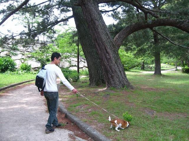 f:id:yasukazu01:20100601220640j:image