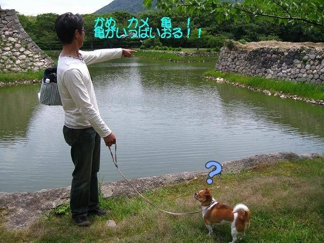 f:id:yasukazu01:20100601220805j:image