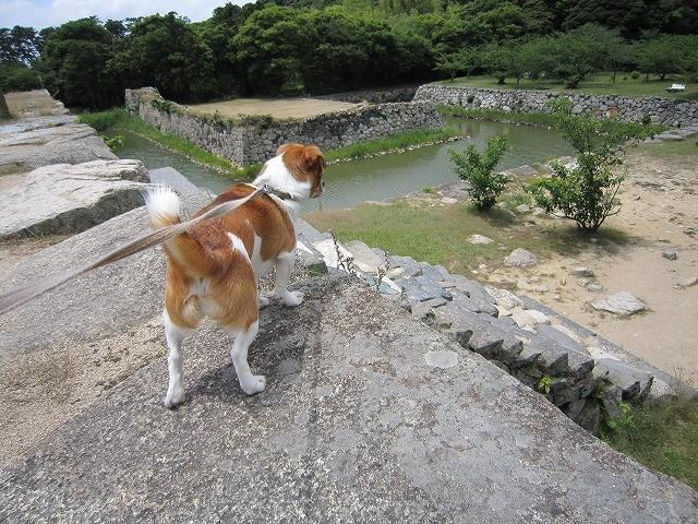 f:id:yasukazu01:20100601224733j:image