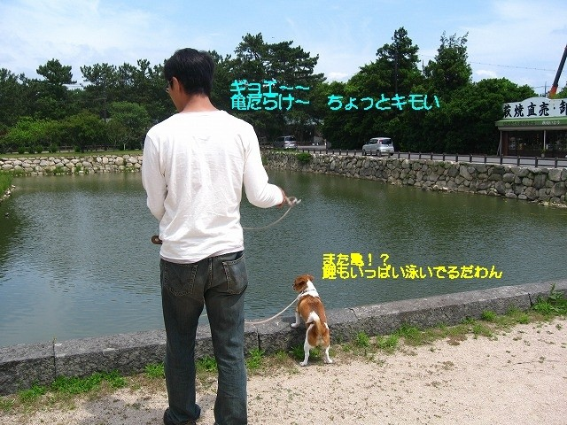 f:id:yasukazu01:20100602221928j:image