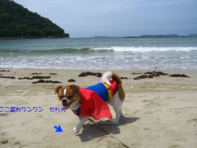 f:id:yasukazu01:20100605223513j:image