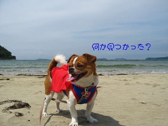 f:id:yasukazu01:20100605223548j:image