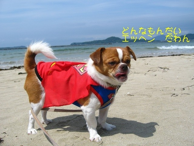 f:id:yasukazu01:20100605223710j:image