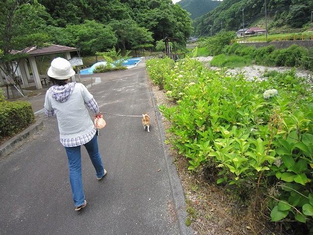 f:id:yasukazu01:20100614212229j:image