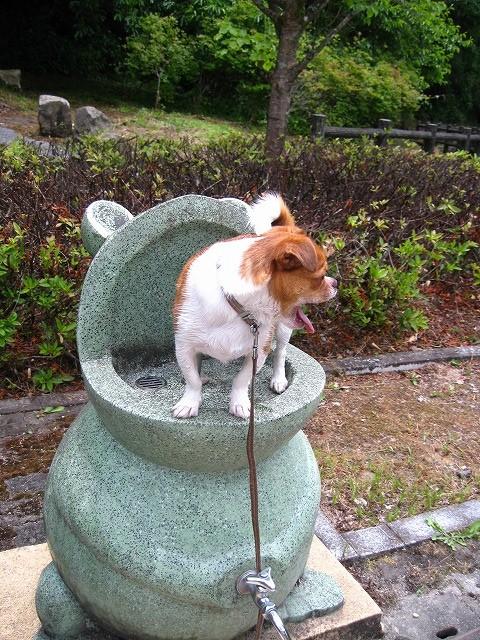 f:id:yasukazu01:20100616230028j:image