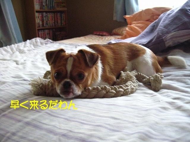 f:id:yasukazu01:20100619230118j:image