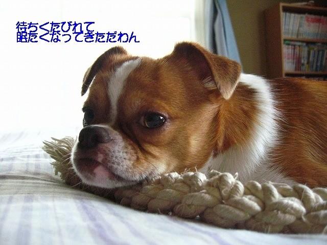 f:id:yasukazu01:20100619230120j:image