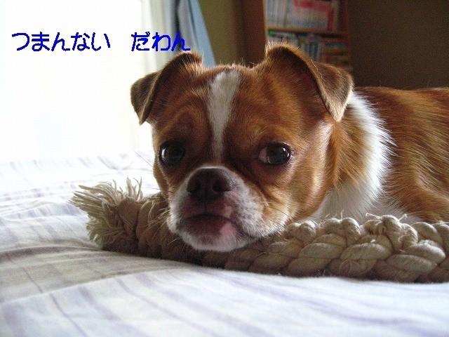 f:id:yasukazu01:20100619230121j:image