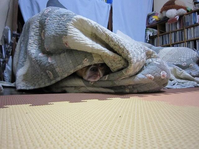 f:id:yasukazu01:20100624222235j:image