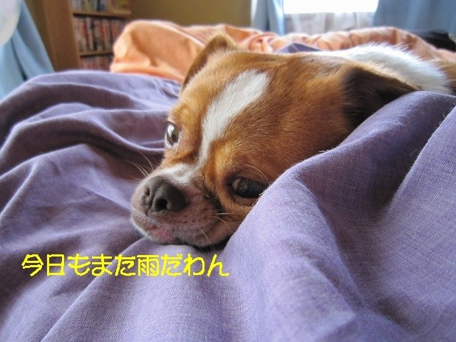 f:id:yasukazu01:20100626203959j:image