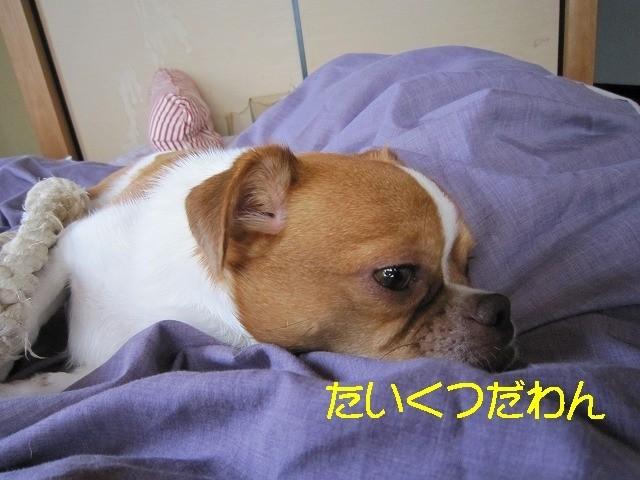 f:id:yasukazu01:20100626204000j:image