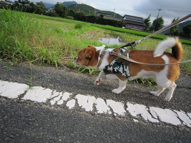 f:id:yasukazu01:20100716214047j:image