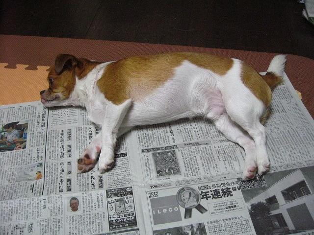 f:id:yasukazu01:20100727215450j:image