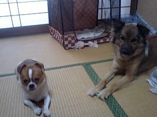 f:id:yasukazu01:20100818160911j:image