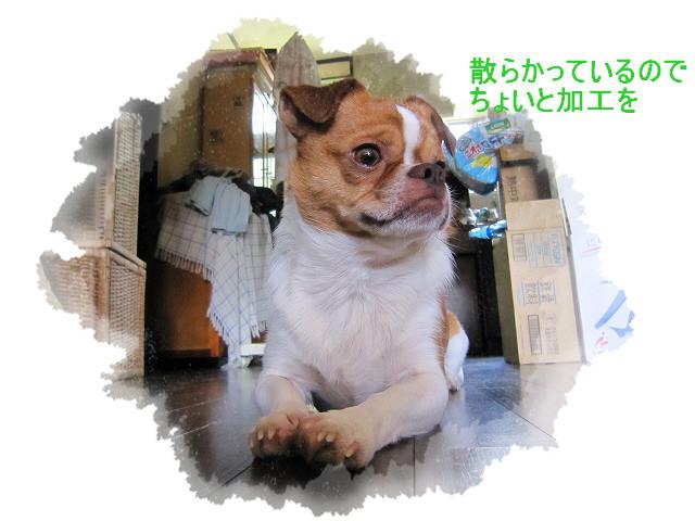 f:id:yasukazu01:20100828224913j:image
