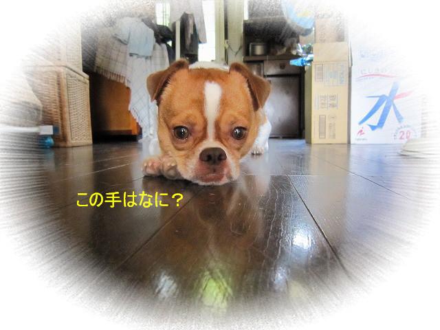 f:id:yasukazu01:20100828225559j:image