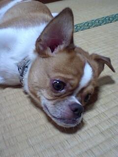 f:id:yasukazu01:20100906193647j:image