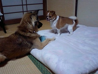 f:id:yasukazu01:20100906194100j:image