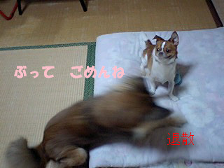 f:id:yasukazu01:20100906194243j:image