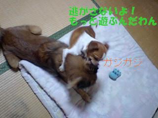 f:id:yasukazu01:20100906194251j:image